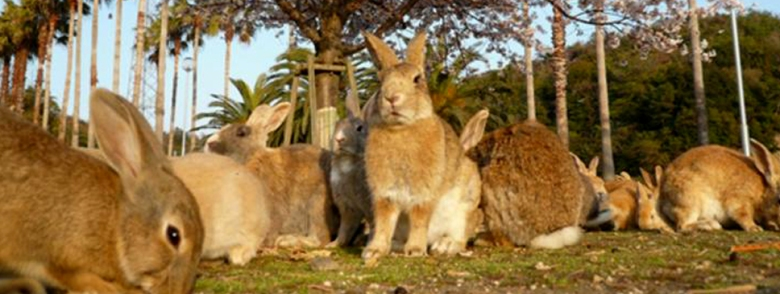 kPulau-Kelinci-Imutnyaaa
