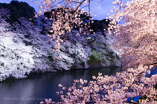 Tempat Indah Menikmati Sakura Mekar Di Tokyo Jepang Enjoy Japan