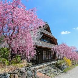 paket-ke-jepang-sakura-iyashi-no-sato