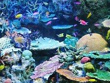 sunshine aquarium.jpg