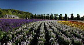 private paket tour ke jepang juli sapporo lavender jepang hanabito