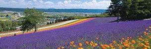 private paket tour ke jepang juli sapporo lavender
