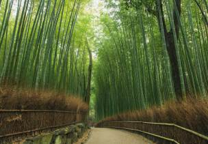 Early in the morning, after a brief rain shower, a relaxing walk through the bamboo forest. A small road leads through the beautifully landscaped bamboo forest. Just a special place. Very few people are on the move.
