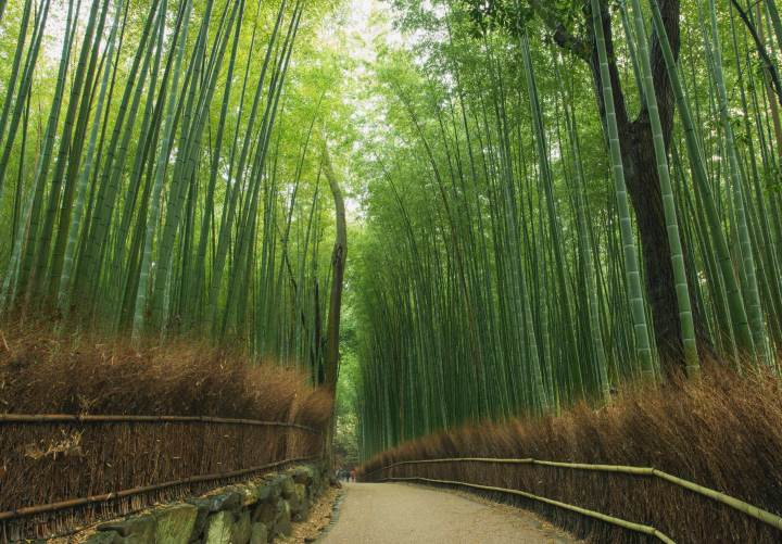 Small path leads through the bamboo forest, Kyoto, Japan