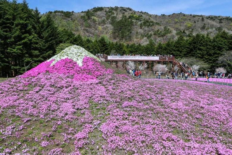 private tour ke jepang melihat sakura di festival shibazakura