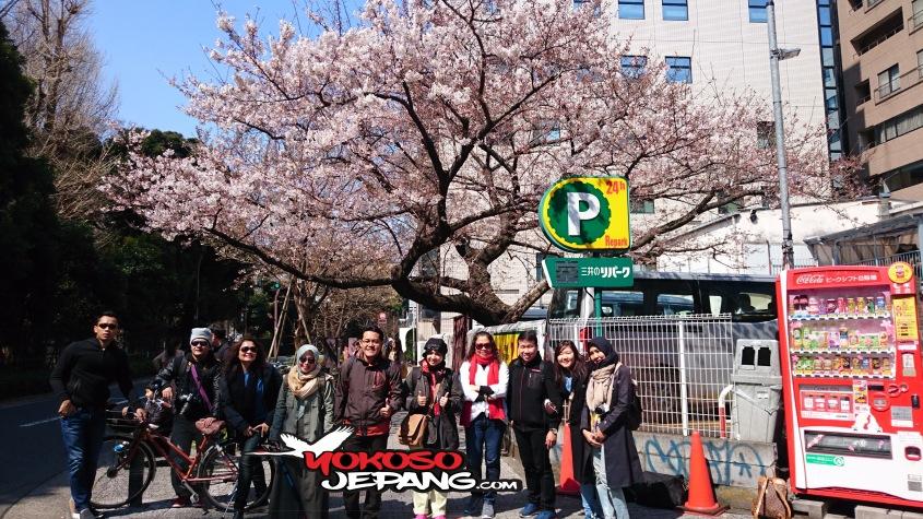 tour jepang sakura 7