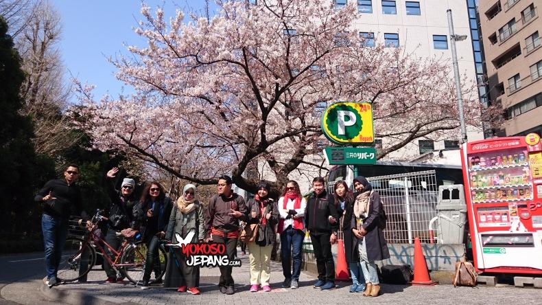 tour jepang sakura 8