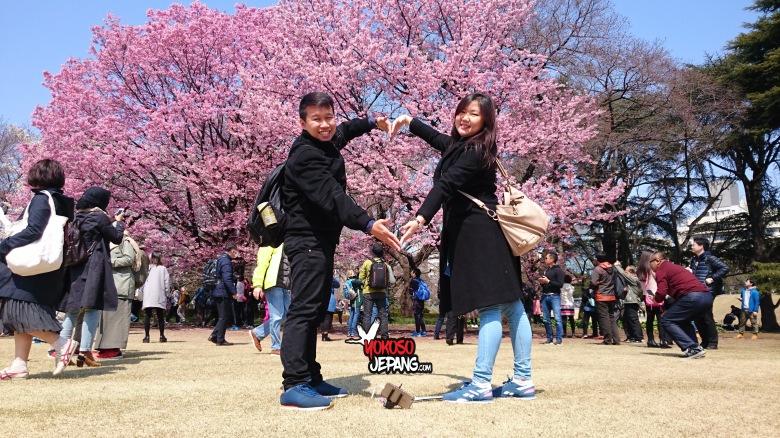 tour ke jepang sakura honeymoon ke jepang 1