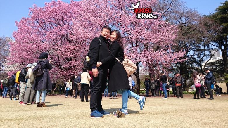 tour ke jepang sakura honeymoon ke jepang 2