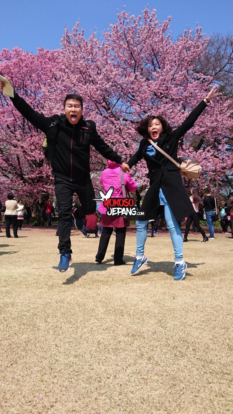 tour ke jepang sakura honeymoon ke jepang 4