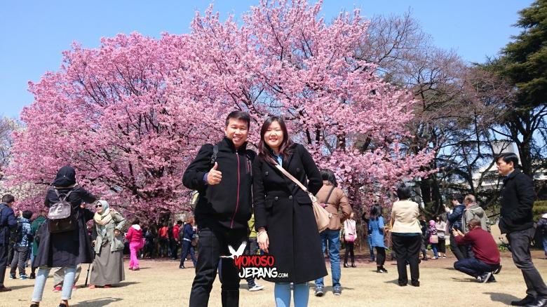 tour ke jepang sakura honeymoon ke jepang