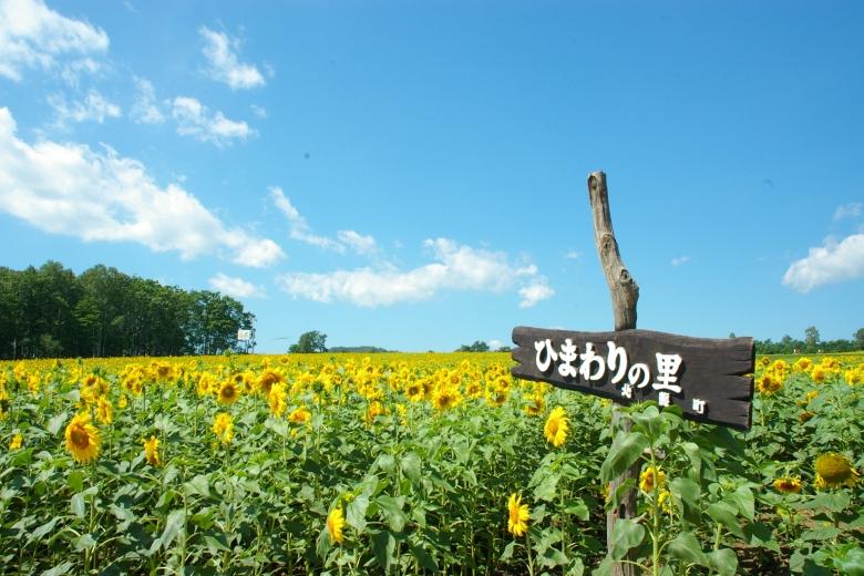 private tour jepang hokkaido Hokuryu of Sunflower Village kebun bunga matahari jepang