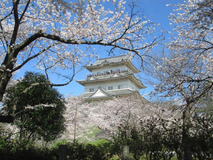 tour jepang sakura