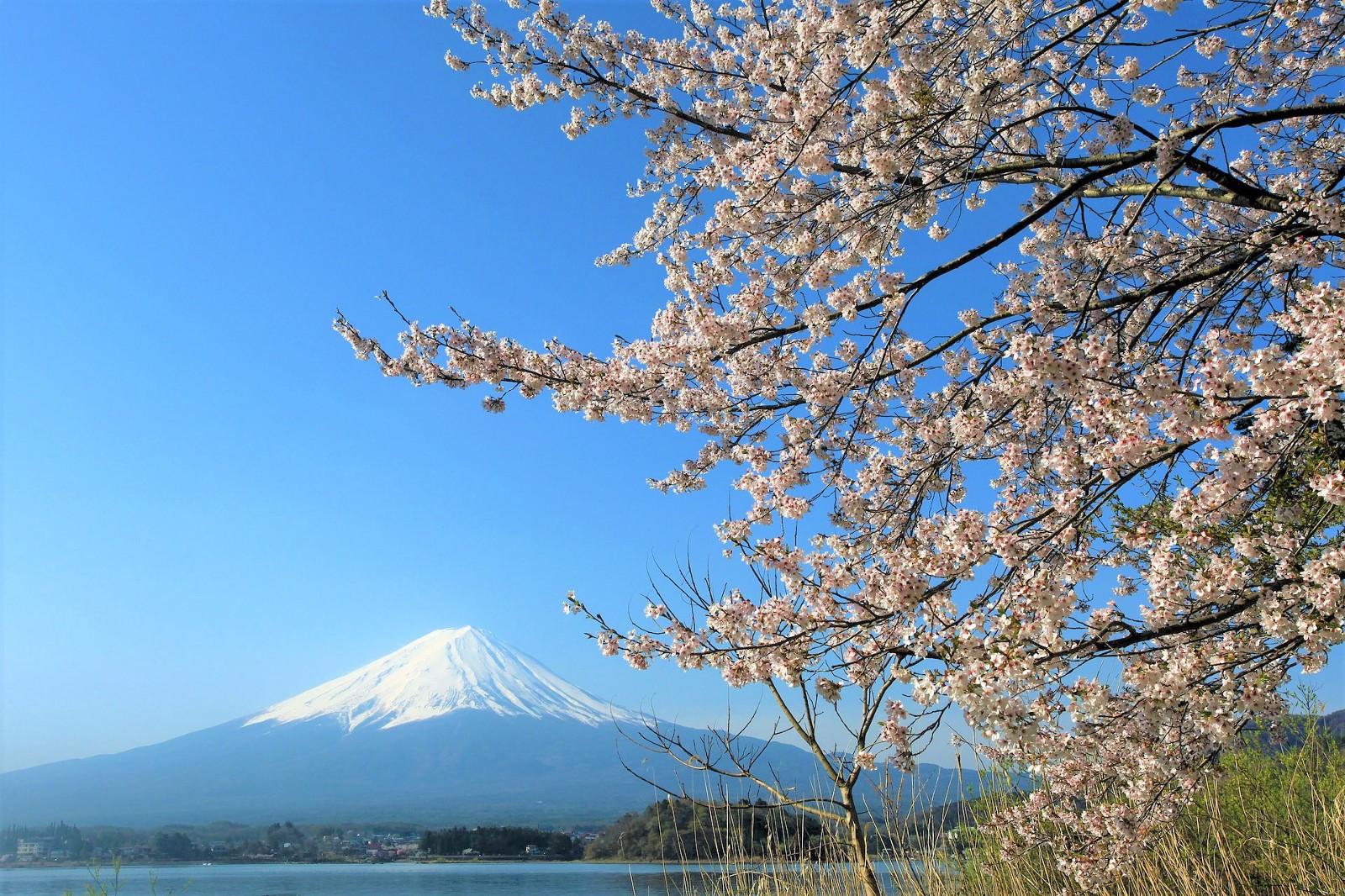 sewa mobil jepang Paket Wisata Tour Jepang Gunung Fuji sehari