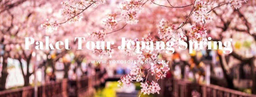 paket tour jepang sakura
