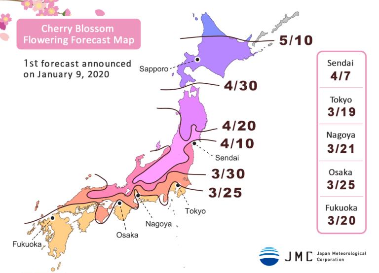 prediksi sakura mekar 2020 di Jepang